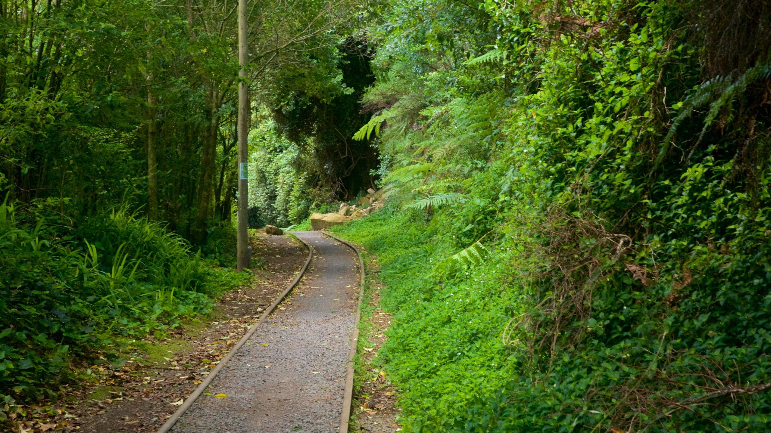 Hauraki Rail Trail - Day Rides, Paeroa, Waikato, New Zealand