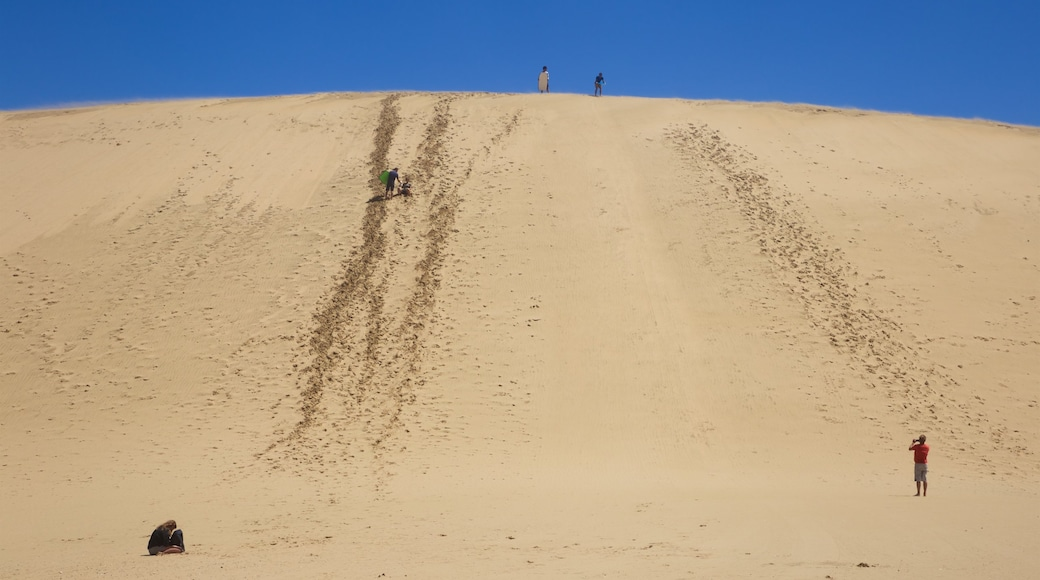 Te Paki Sand Dunes showing desert views and landscape views as well as a small group of people