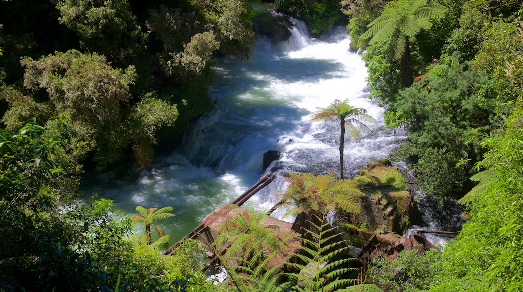 Okere Falls Scenic Reserve which includes a river or creek and rapids