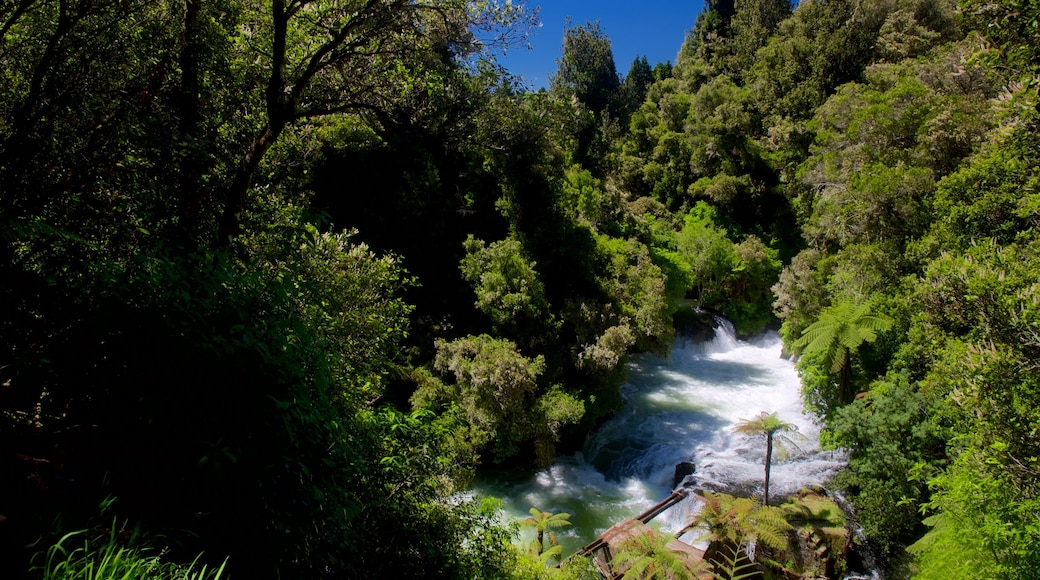 Okere Falls Scenic Reserve featuring forest scenes, rapids and a river or creek