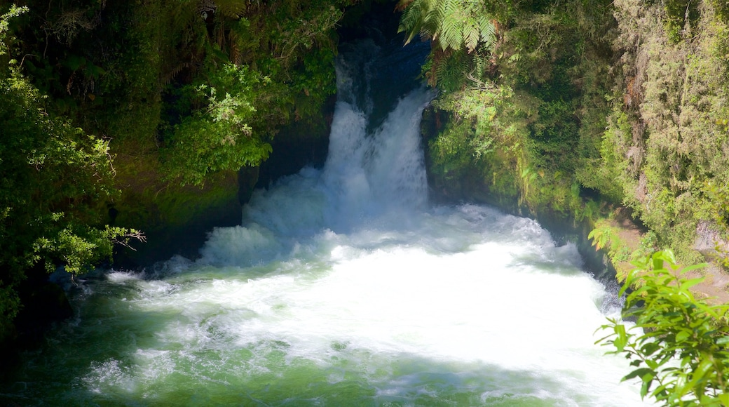 Okere Falls Scenic Reserve showing rapids and a river or creek