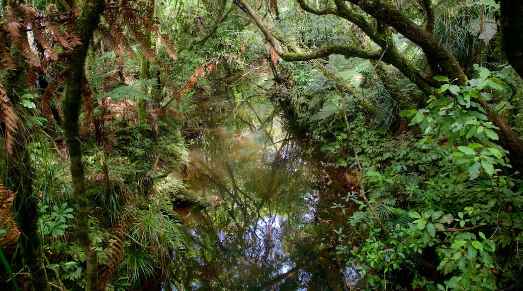 Tane Mahuta showing a river or creek and forest scenes
