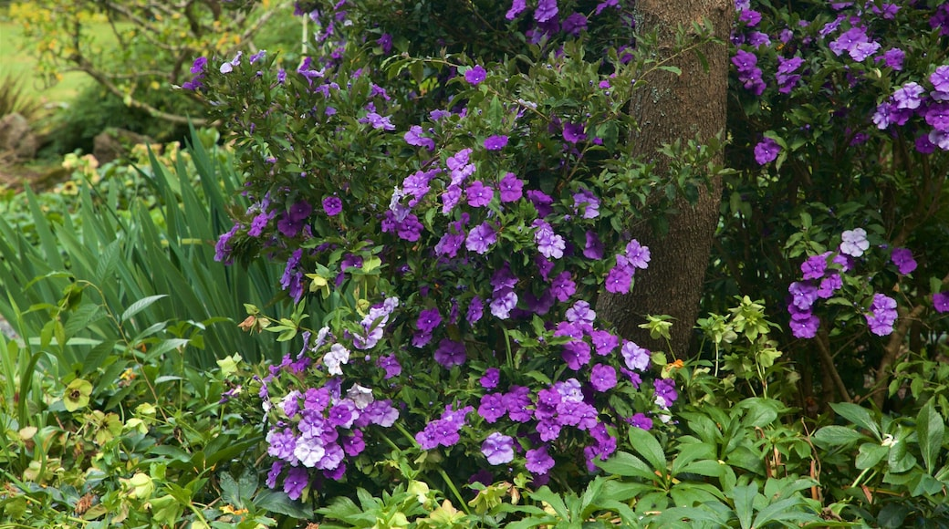 Botanica & Cafler Park featuring wild flowers