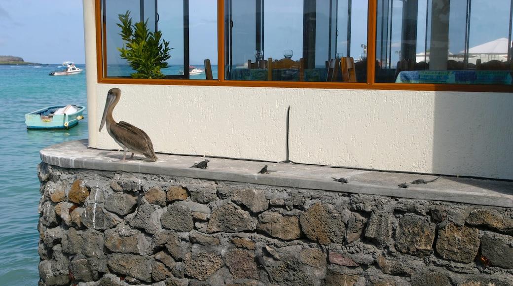 Santa Cruz Island which includes bird life