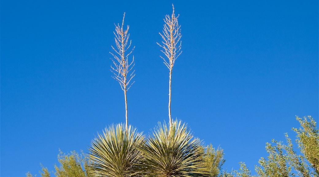 Desert Botanical Garden showing a garden