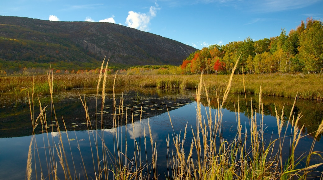 Acadia National Park which includes a pond and tranquil scenes
