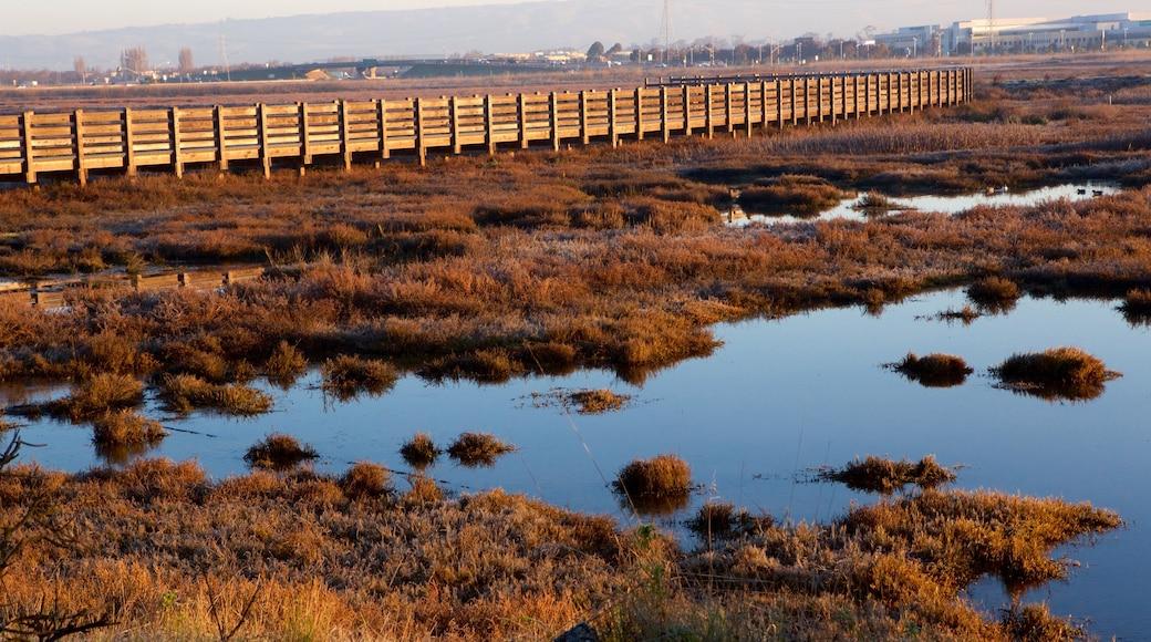 Don Edwards San Francisco Bay National Wildlife Refuge showing tranquil scenes, a sunset and wetlands