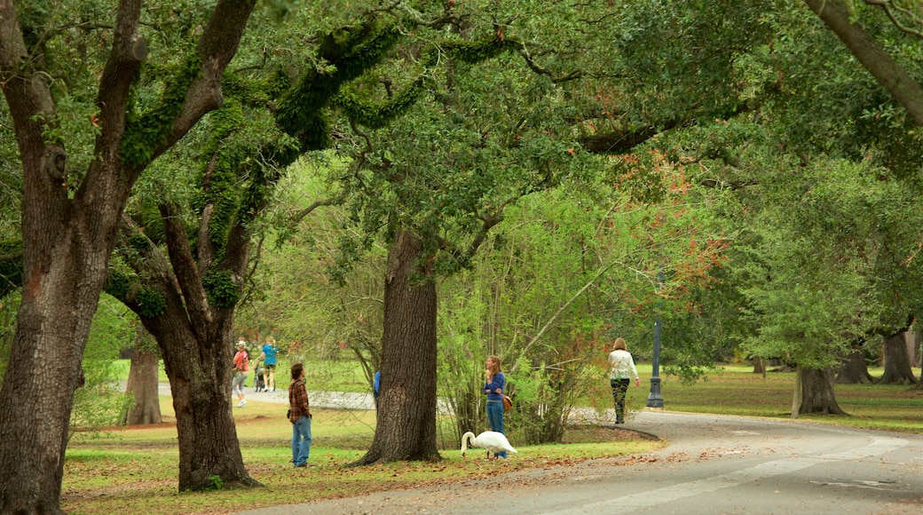 สวนสาธารณะออดูบอน ซึ่งรวมถึง สวน ตลอดจน คนกลุ่มเล็ก