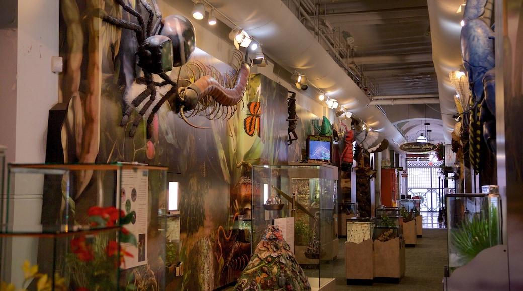 Audubon Insectarium featuring interior views