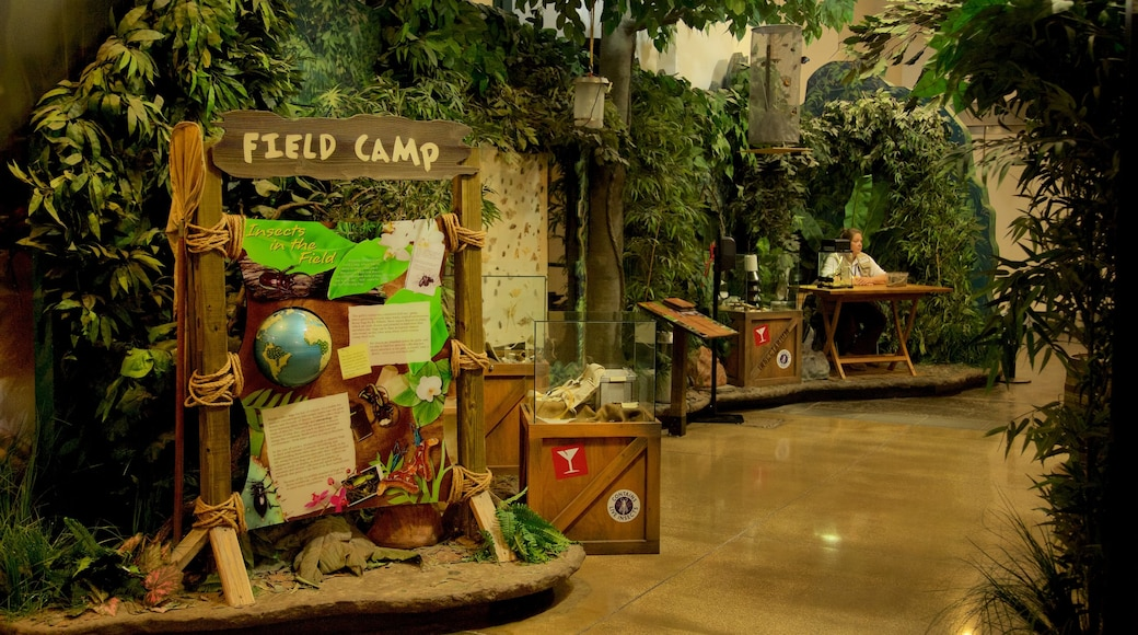 Audubon Insectarium which includes interior views and signage