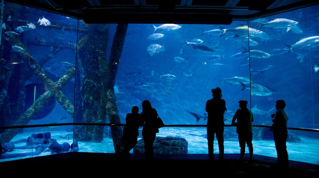Audubon Aquarium of the Americas showing marine life and interior views as well as a small group of people