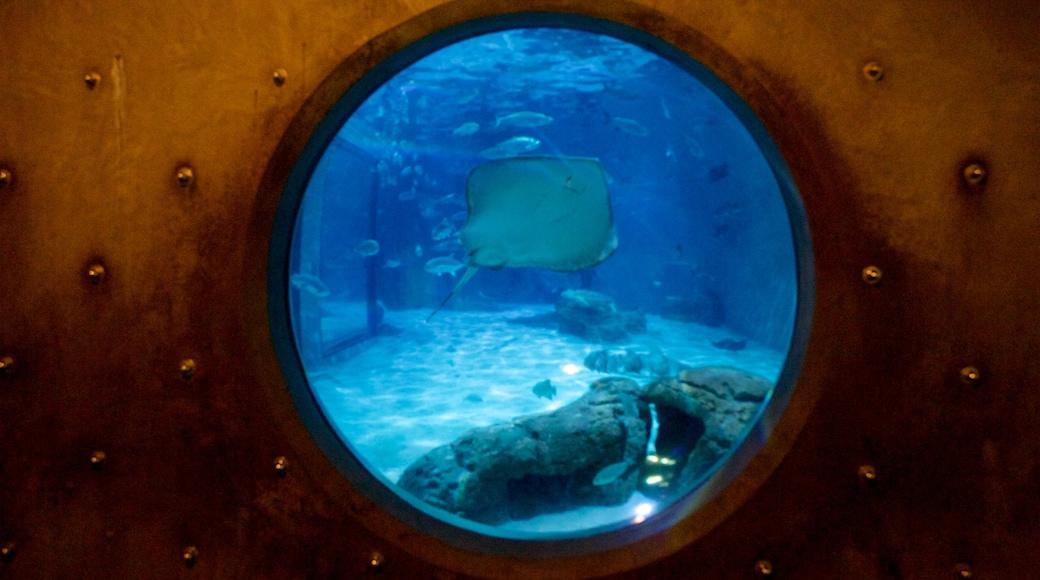 Audubon Aquarium of the Americas featuring interior views and marine life