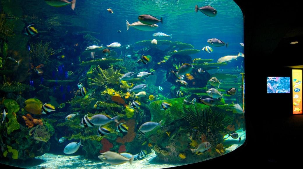 Ripley\'s Aquarium featuring interior views and marine life
