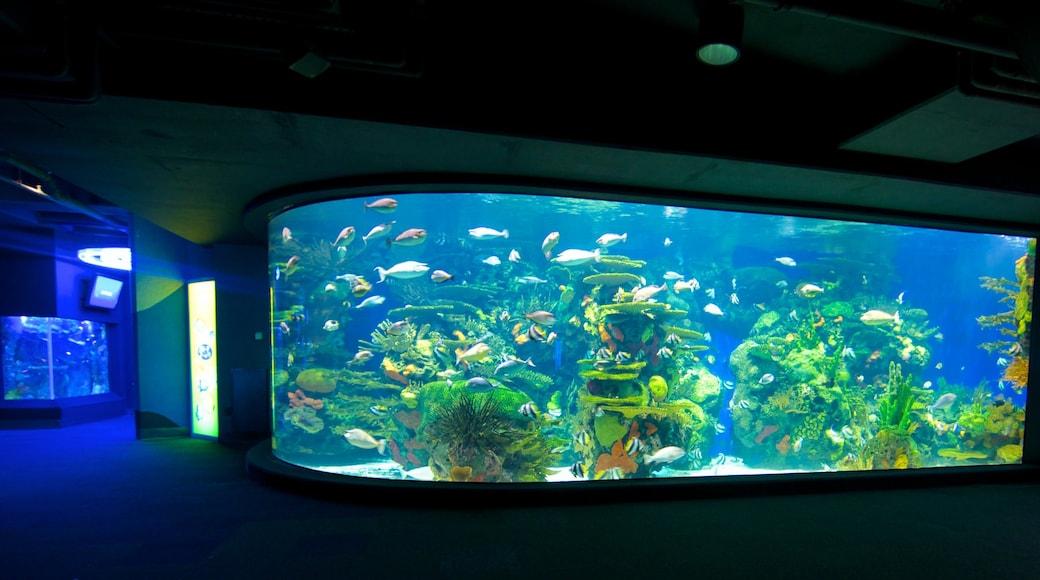 Ripley\'s Aquarium showing marine life and interior views