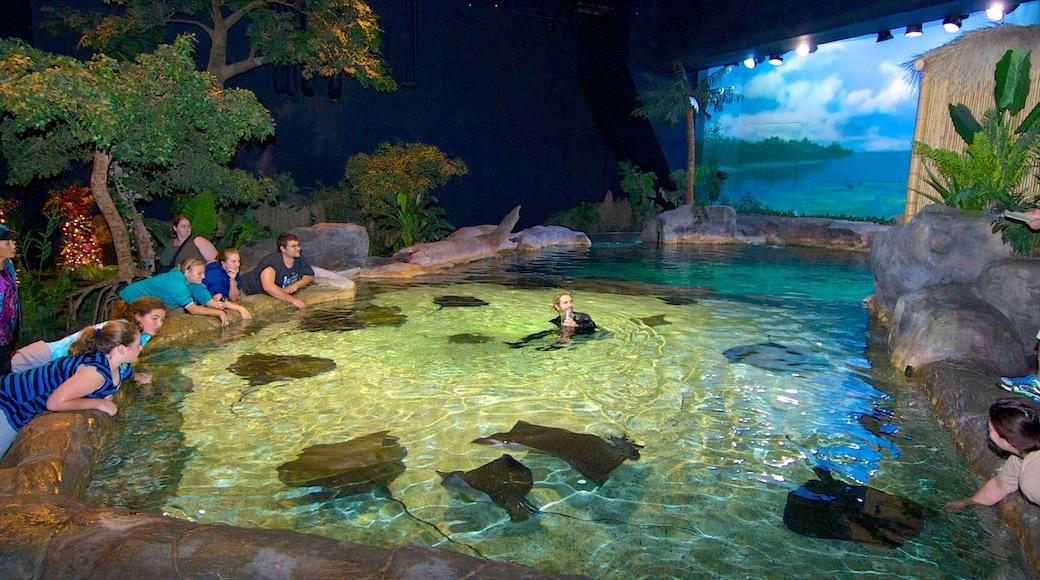 Ripley\'s Aquarium featuring marine life and interior views
