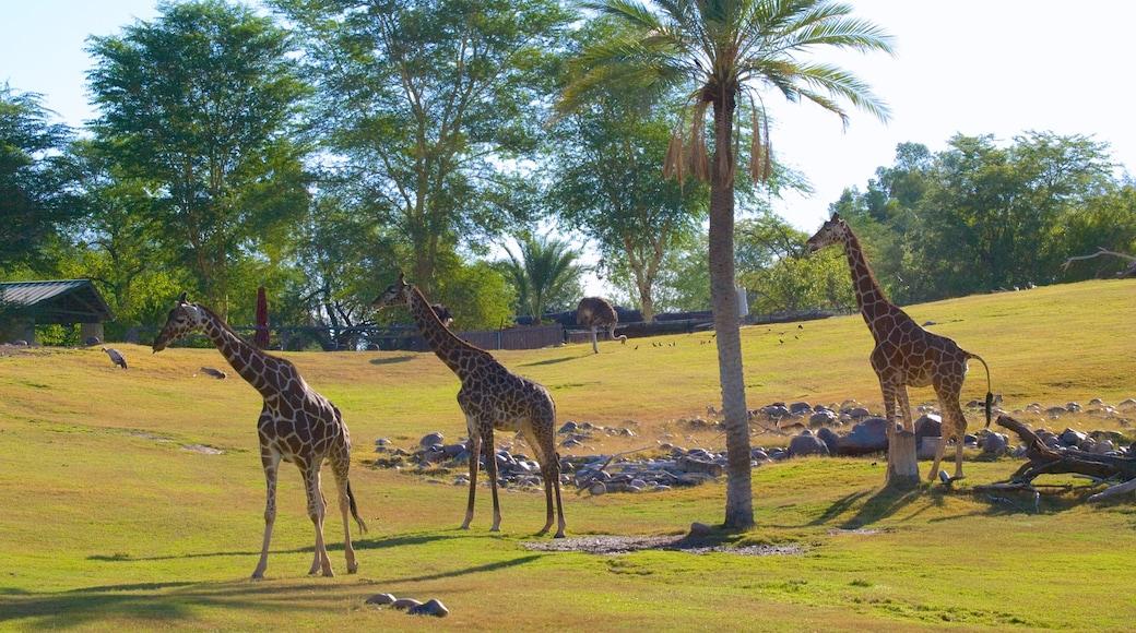 Phoenix Zoo showing land animals and zoo animals