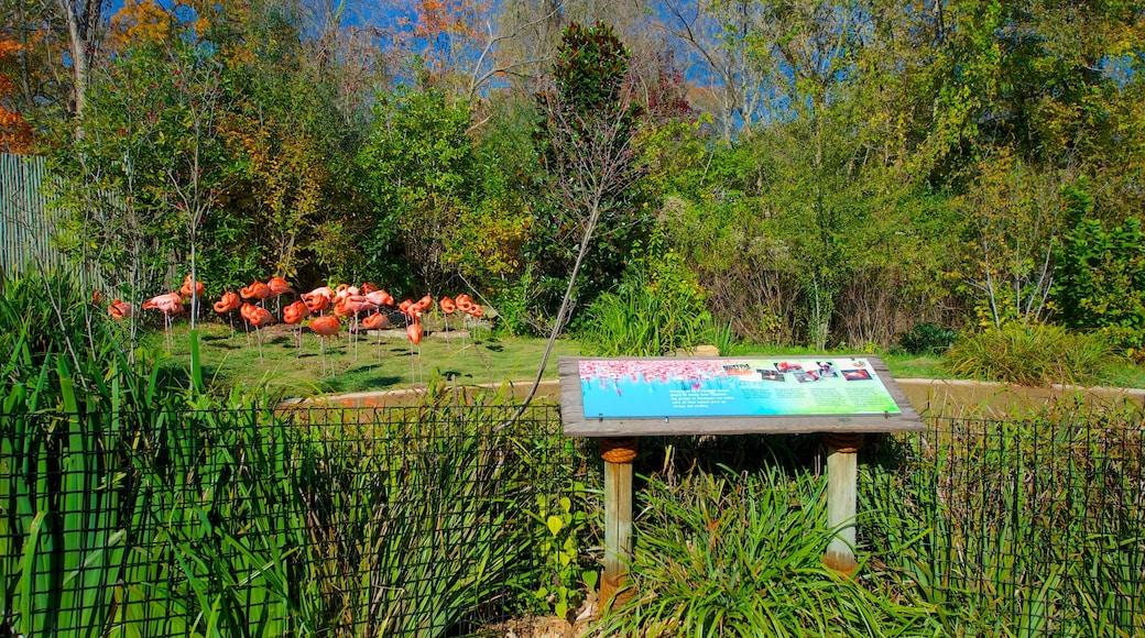 Nashville Zoo featuring bird life, zoo animals and a garden