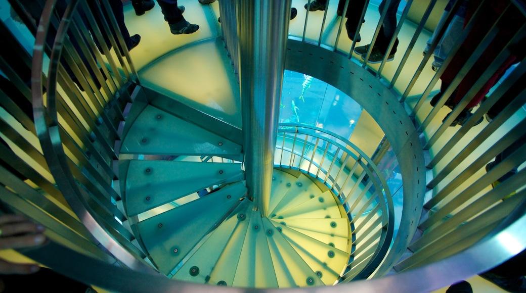 Aquadom inclusief moderne architectuur, zeedieren en interieur