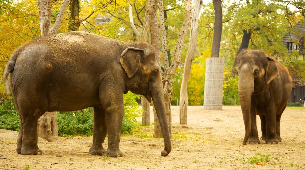 Zoológico de Berlín ofreciendo animales de zoológico y animales terrestres