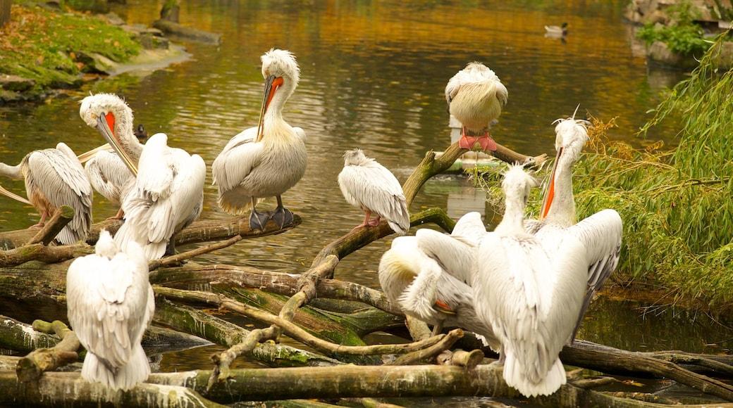 Zoológico de Berlín que incluye animales de zoológico y aves