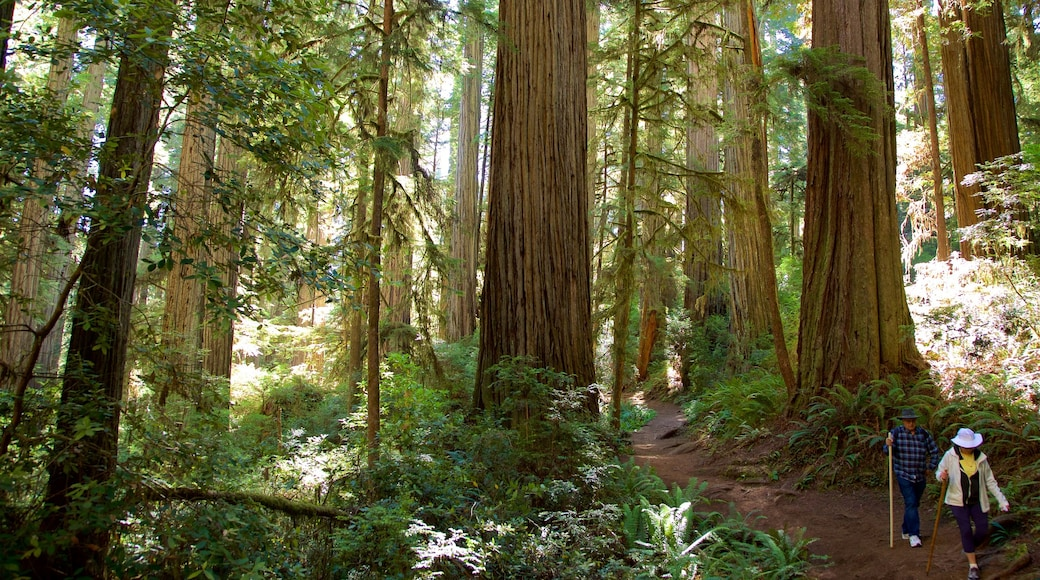 Redwood National and State Parks which includes hiking or walking and forests as well as a couple