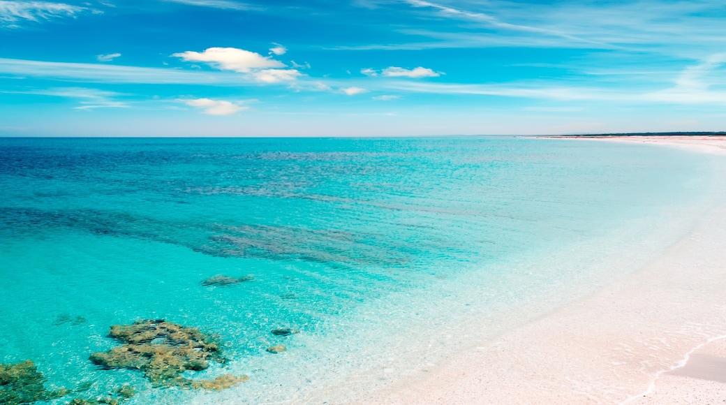 Stintino caratteristiche di coralli, spiaggia e vista della costa