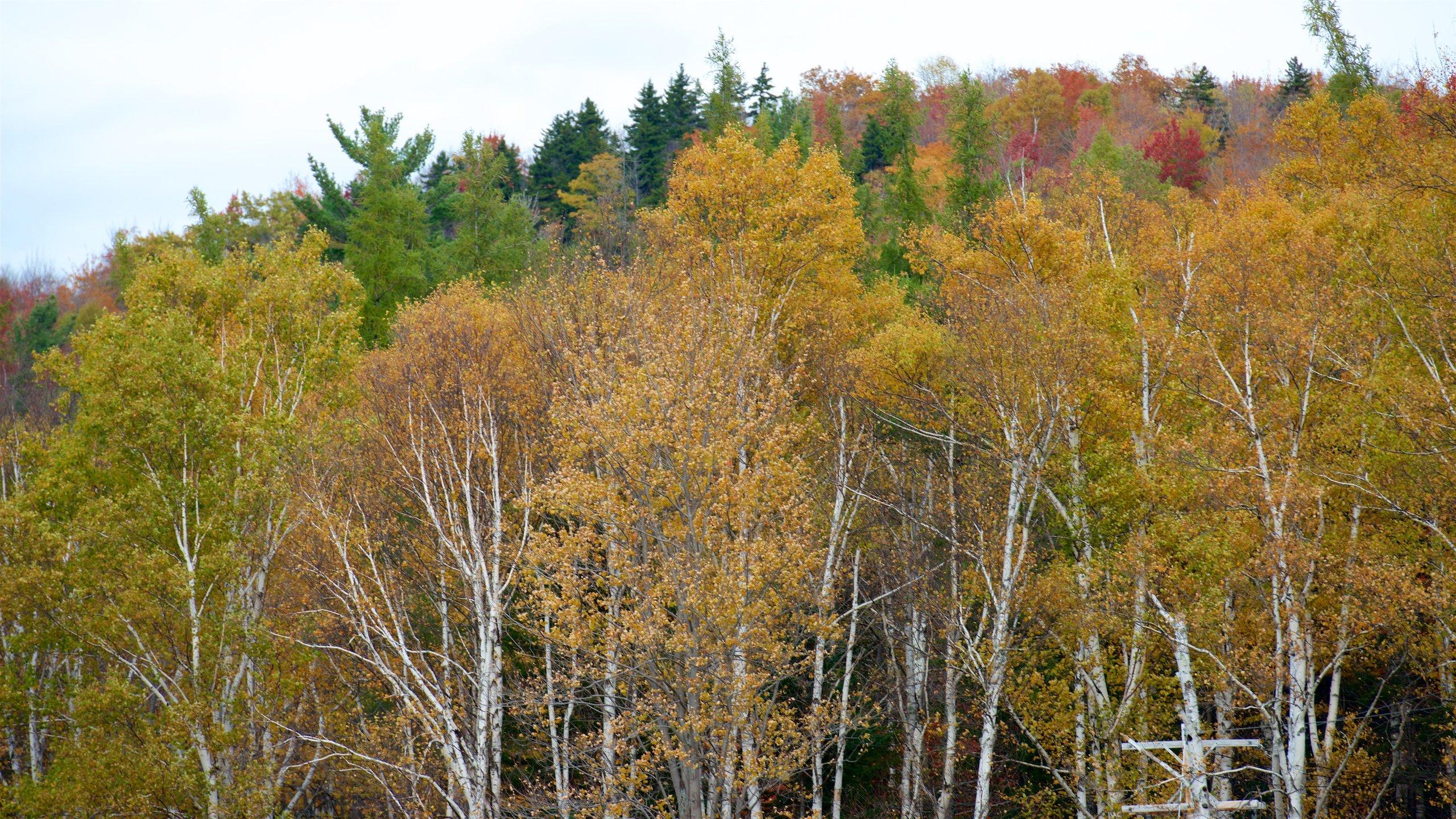 Belknap County, New Hampshire, United States of America