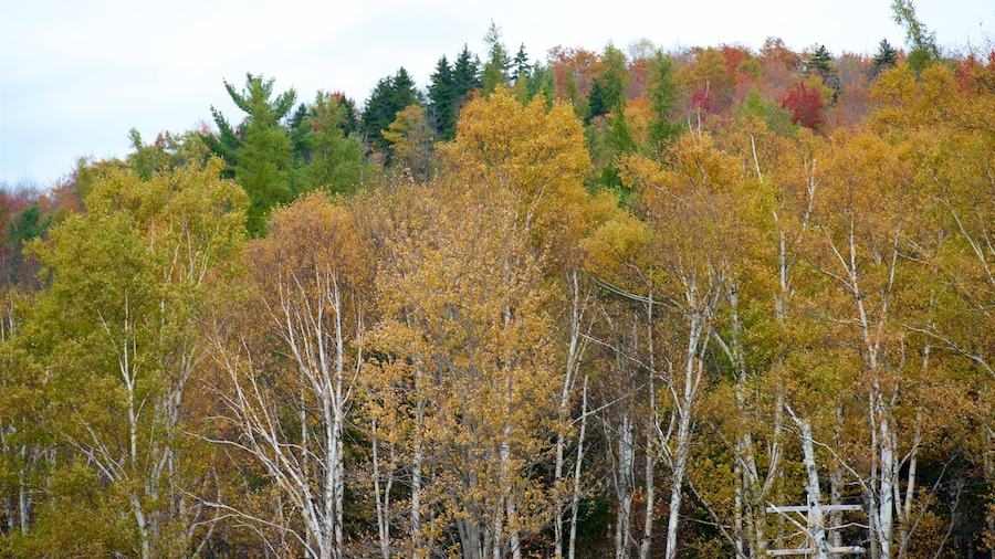New Hampshire featuring fall colors and forests