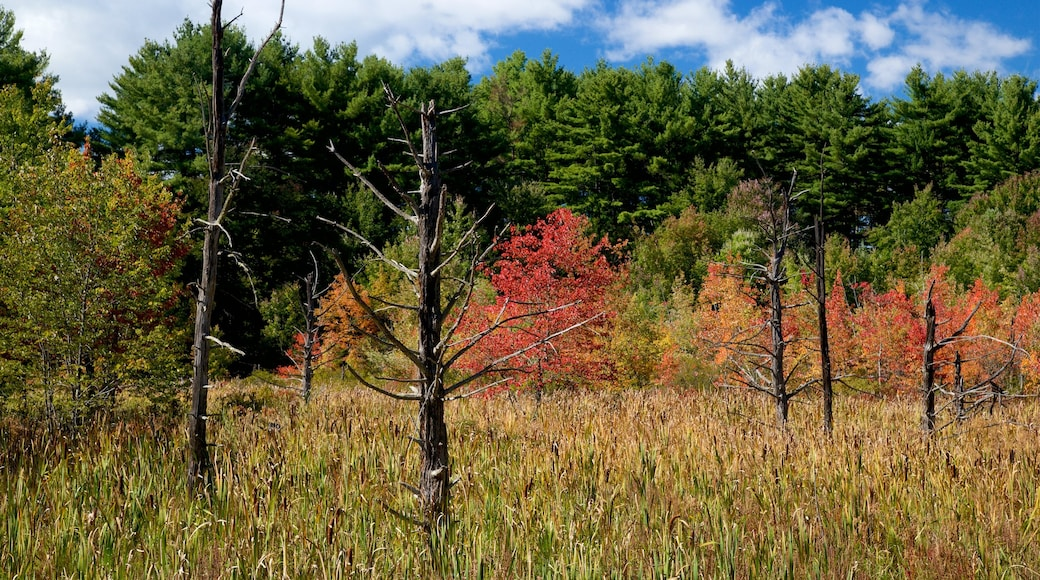 New Hampshire showing autumn leaves and tranquil scenes