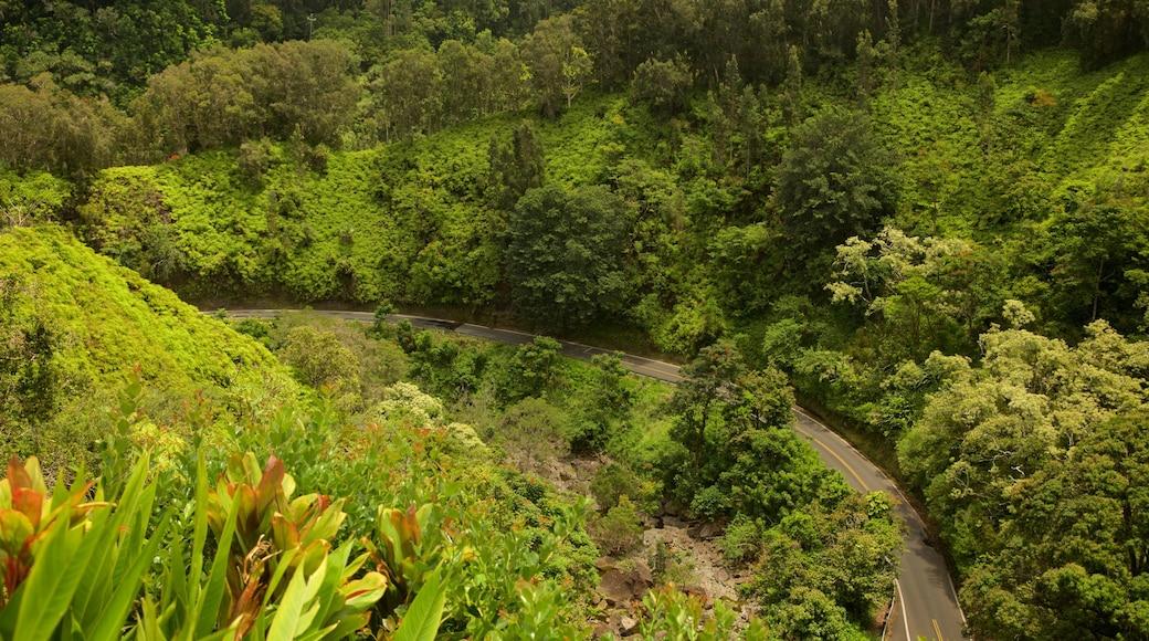Garden of Eden Arboretum which includes forest scenes