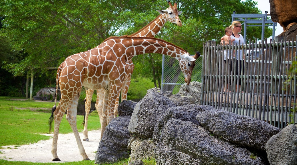 Stadsdierentuin van Miami inclusief landdieren en dierentuindieren