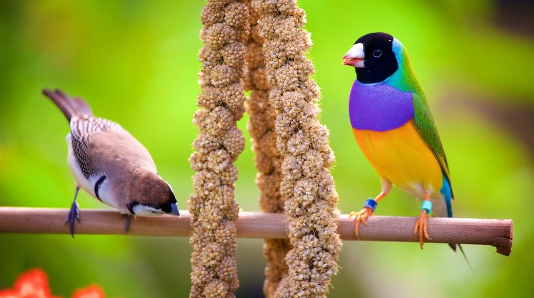 Butterfly World fasiliteter samt fugleliv og dyrehagedyr