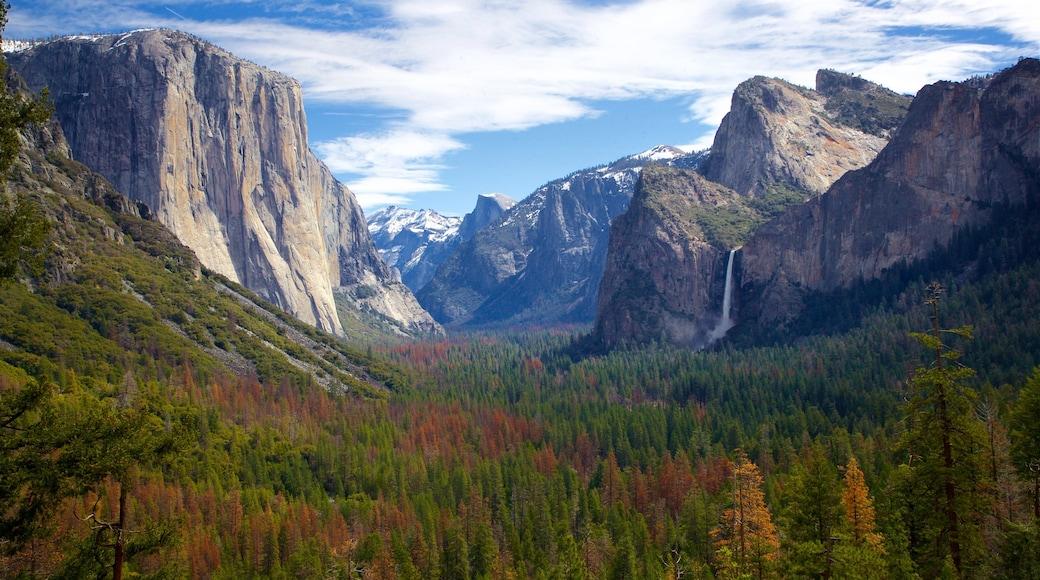Yosemiten kansallispuisto joka esittää rotko tai kanjoni, rauhalliset maisemat ja maisemat