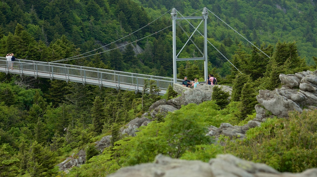 Grandfather Mountain showing tranquil scenes and a bridge as well as a small group of people