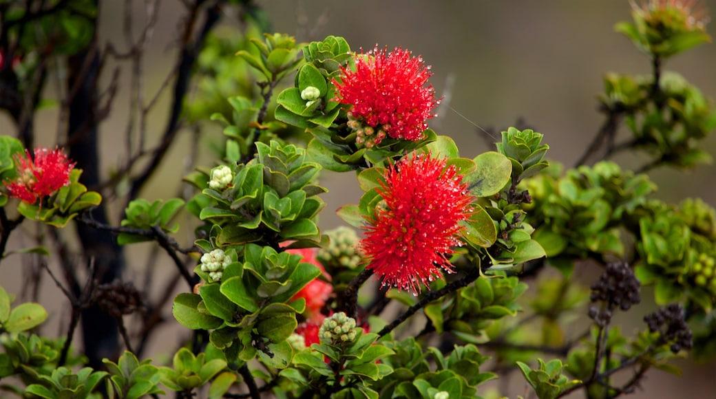 Hawaii Volcanoes National Park featuring wildflowers