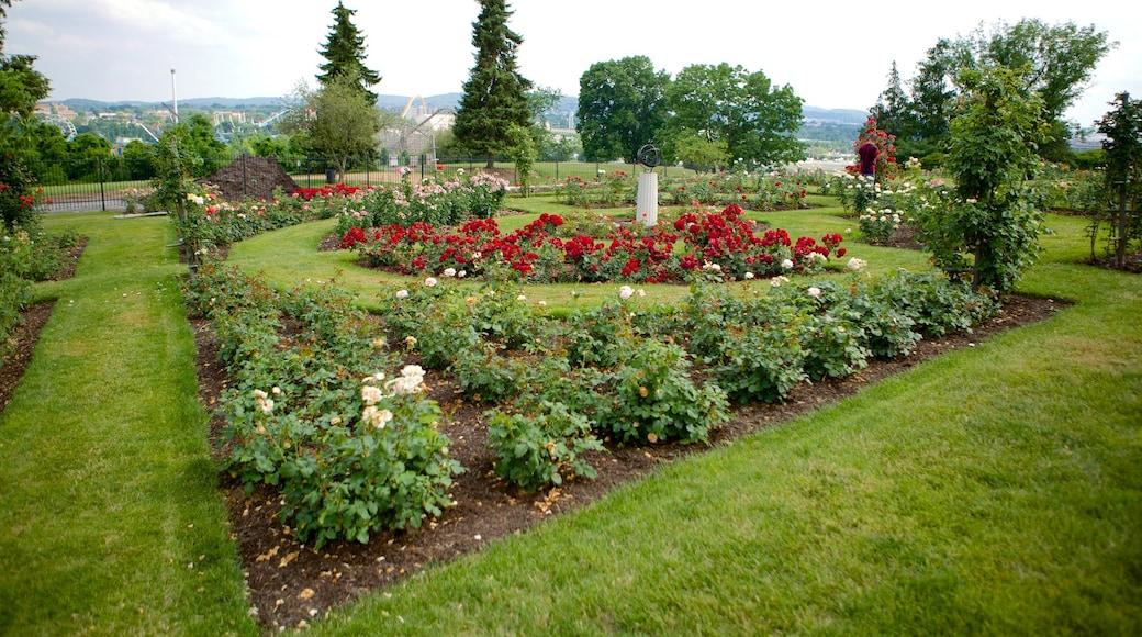 Hershey Gardens mostrando flores silvestres e um parque