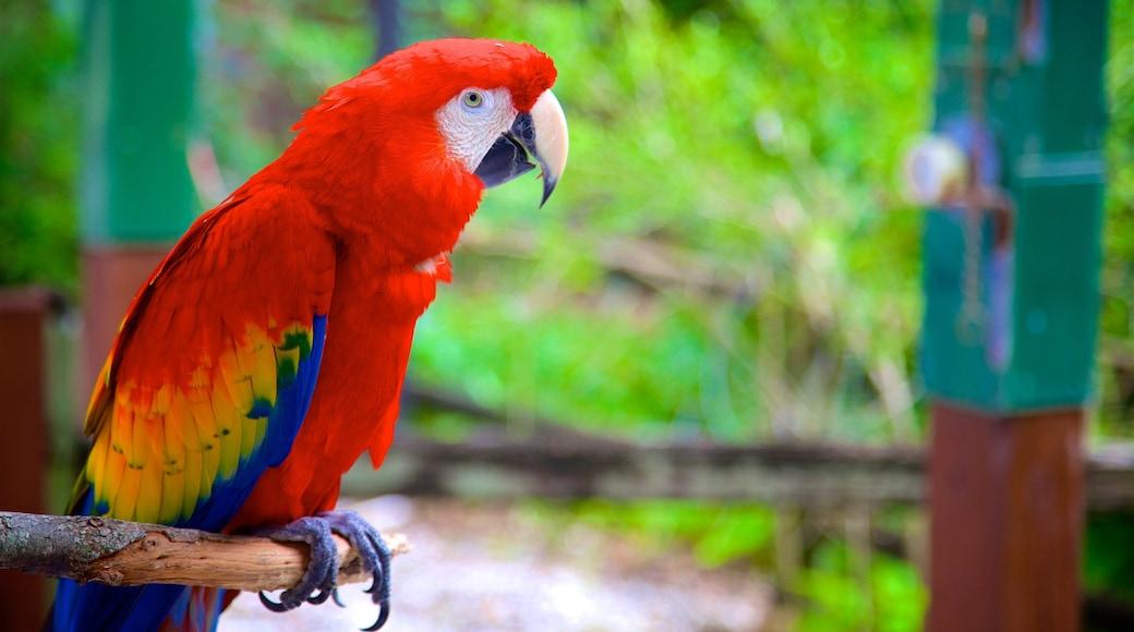Sarasota Jungle Gardens featuring bird life and zoo animals