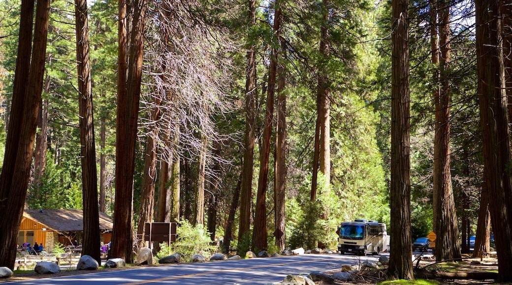 Yosemite Lodge Amphitheater which includes forest scenes