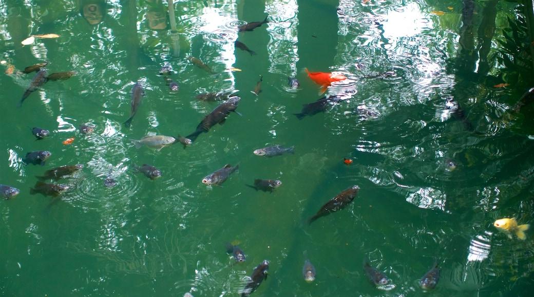 Monasterio Wenshu mostrando vida marina y un estanque