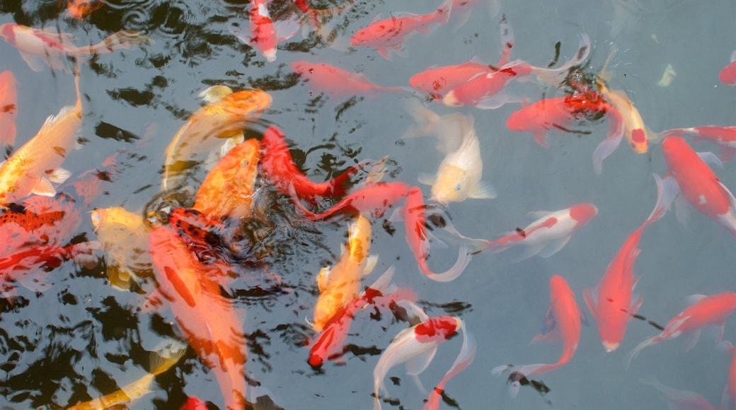 桂林 设有 海洋生物 和 池塘