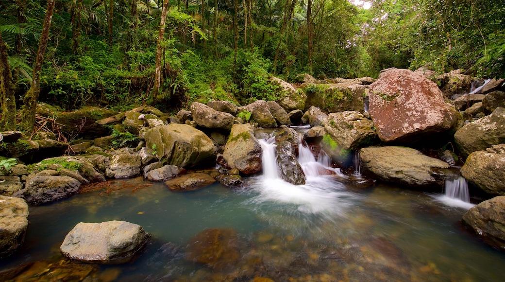Floresta Nacional de El Yunque