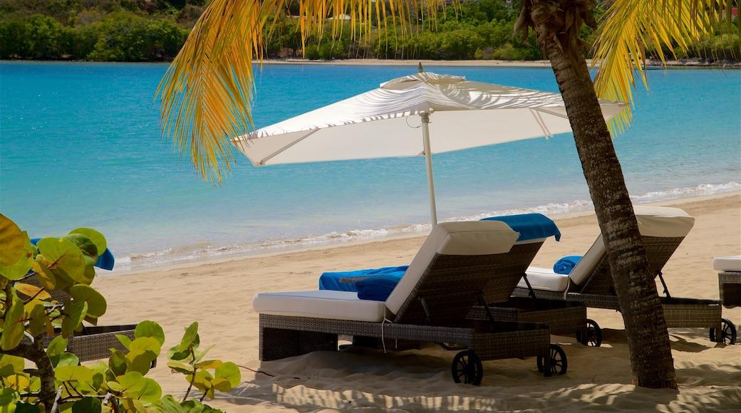 Carlisle Beach showing general coastal views, tropical scenes and a sandy beach