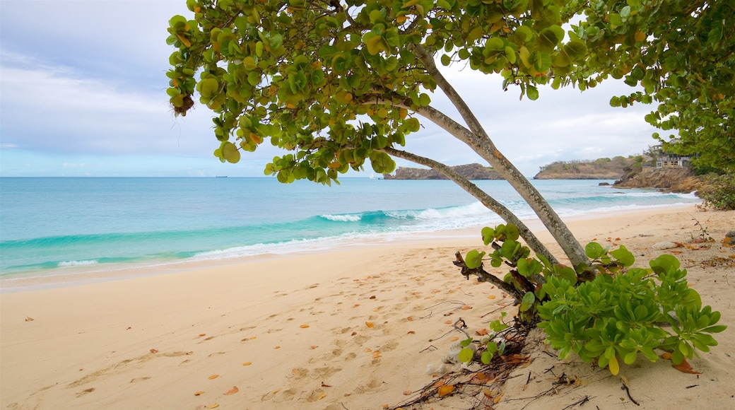 Galley Bay showing tropical scenes, a sandy beach and general coastal views