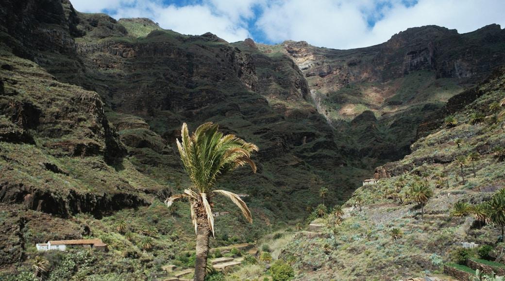 La Gomera mostrando vistas panorámicas y un cañón o garganta
