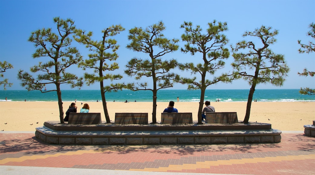 Haeundae Beach featuring general coastal views and a sandy beach as well as a small group of people