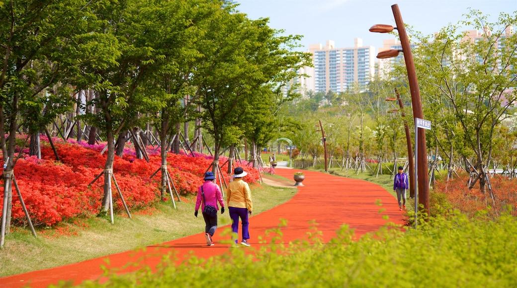 Busan Citizens Park showing a city, wild flowers and a garden