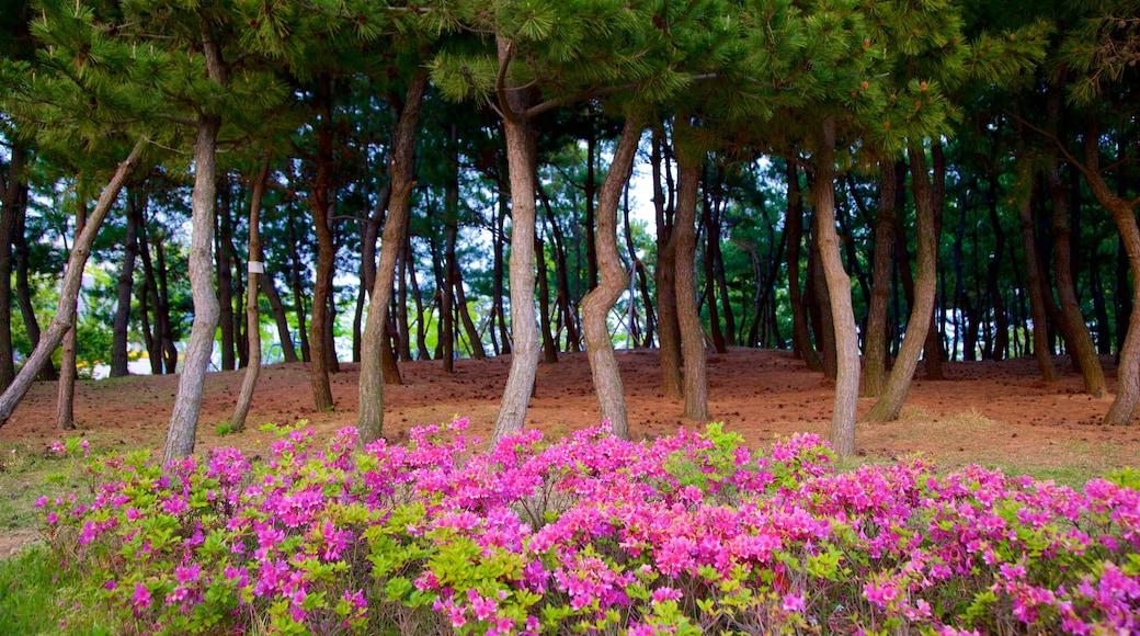 Busan que incluye flores silvestres y un parque