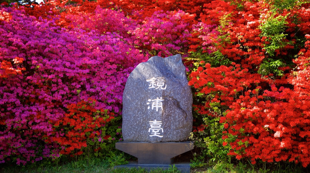 Gyeongpodae which includes wild flowers and signage