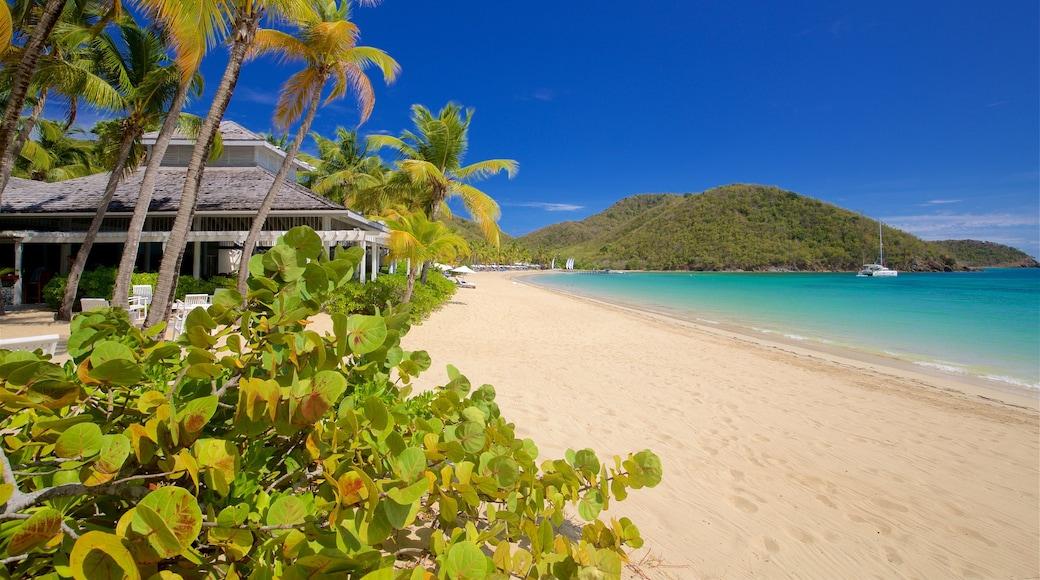 Antigua showing a beach, tropical scenes and general coastal views