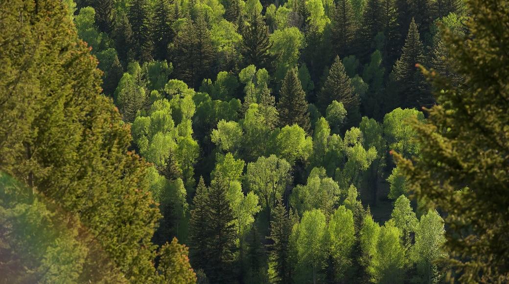 Moran welches beinhaltet Wälder